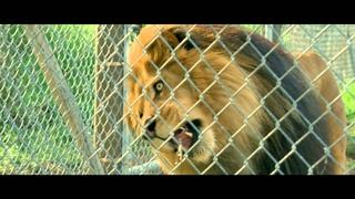 Мы купили зоопарк - Трейлер C