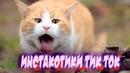 Приколы с котами Смешные коты смешные видео тест на психику кот попробуй не засмеяться