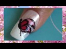 Naill beautiful butterfly foundation for beginners nail art designs 2015 Full HD