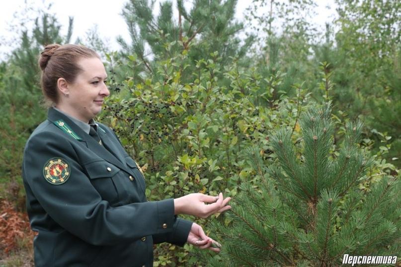 Интервью в Скидельском лесхозе