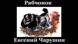 Рябчонок   Евгений Чарушин  читает Павел Беседин