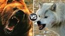 МЕДВЕДЬ В ДЕЛЕ! Медведь против тигра, волка, лося