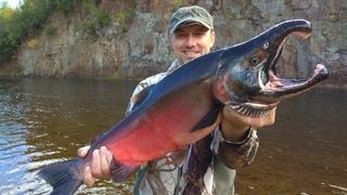 Монстры Сахалина. Рыбалка и приключения на таежной реке. Salmon fishing, monster fish. Часть 2