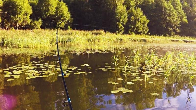 ЗДЕСЬ Я НЕ ОЖИДАЛ ПОЙМАТЬ ТАКОЕ Что это за ВОЛШЕБНОЕ МЕСТО Вот это рыбалка на спиннинг 4 ● ВОДА КИПЕЛА КОГДА МЫ ЕГО ДОСТАВАЛИ МЫ ЭТУ РЫБАЛКУ ЗАПОМНИМ рыбалка с ночёвкой ЭТИ КРОКОДИЛЫ УБИВАЮТ ЖЕРЛИЦЫ КОНСКАЯ ЩУКА По