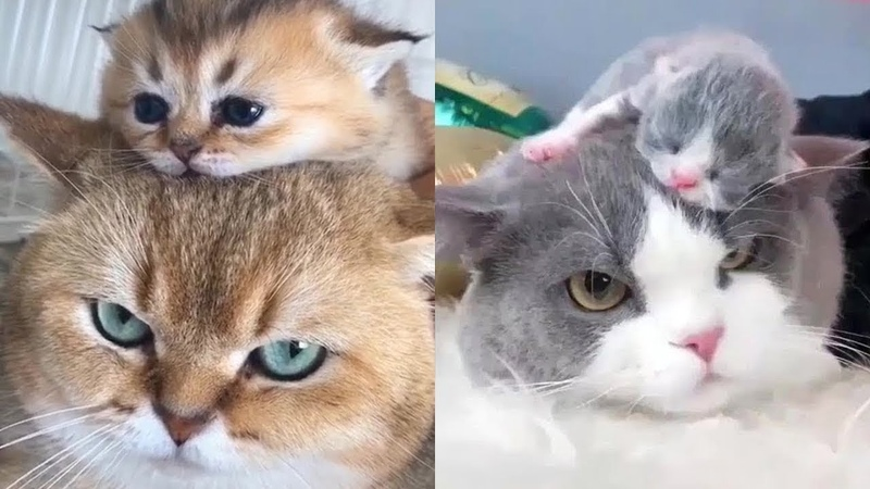 Mother Cat And Kittens Funny and Cute Cats Compilation 2020 2 CuteVN