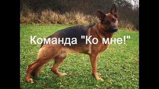 Дрессировка собаки: Команда Ко мне!