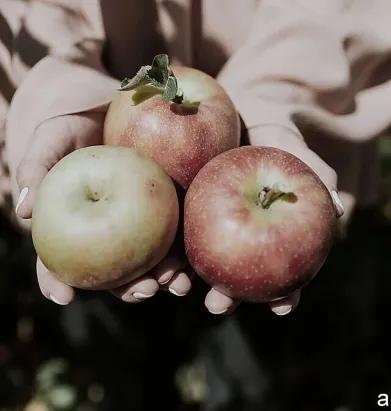 ГОРЬКИЕ ЯБЛОКИ В ночь, накануне свадьбы, Алисе приснился странный сон. Малиново румяные яблоки лежали на просторном блюде. Предвкушая сочность и сласть, девушка надкусила одно и отложила, не