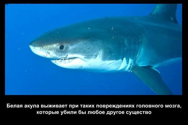 валтея - Интересные факты о акулах / Хищники морей.(Видео. Фото) JZa7xkHqizA