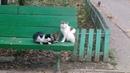 Прикол с котами