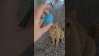 Playful Kitty Demands Game of Fetch || ViralHog