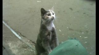 Молодая кошечка ищет дом в Твери. Историю читать под видео.