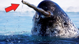 10 Самых необычных органов чувств у животных