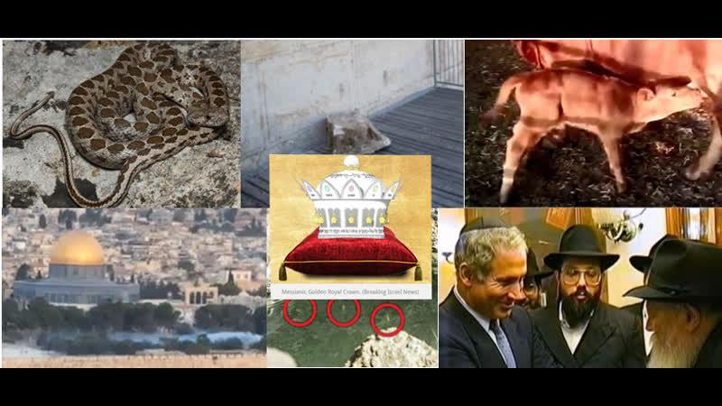 Верующие увидели зловещие знаки в трагической сцене на Стене Плача