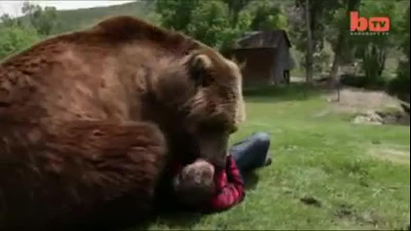 Помните в 3 м сезоне Игры престолов леди Бриенну заставили драться в яме с медведем И ей пришел бы неминуемый конец если бы