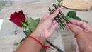 Как укоренить розы из букета АЛОЭ ВЕРА - секрет успеха!