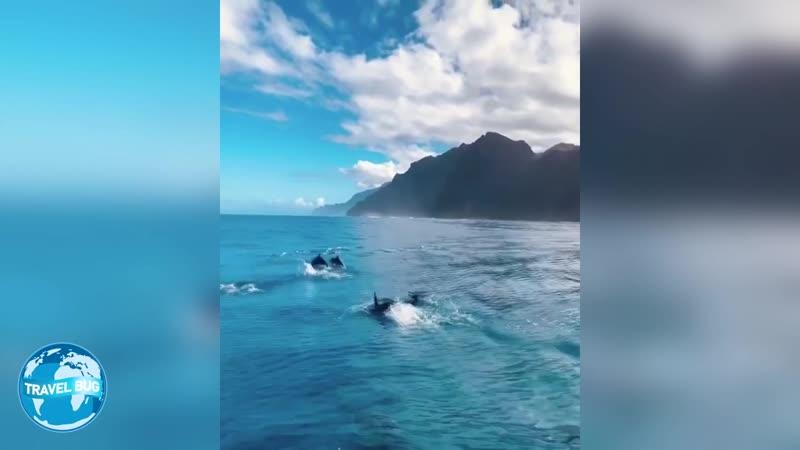 Более 100 дельфинов встречают небольшую лодку Гавайи