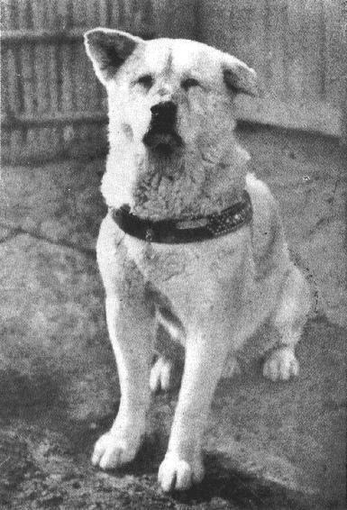 8 марта 1935 умер Хатико, пёс породы акита-ину, ждавший своего умершего хозяина 9 лет и ставший символом верности и преданности в Японии Хатико появился на свет 10 ноября 1923 года в японской