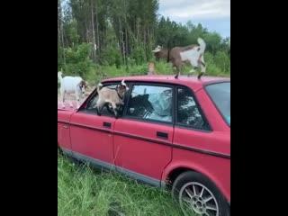 Опа, а вот и мои пассажиры!