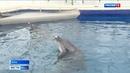 В Крыму борются за жизни дельфинов