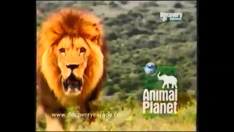 Проморолик канала Animal Planet 2000 2004 г 12