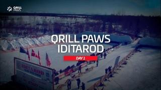 Iditarod Race Recap | QRILLPAWS 2021