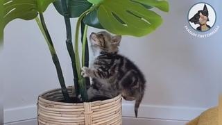 Котики дарят улыбку 😊😁😘 Наглый кот Жадный котенок Смешные кошки 💖
