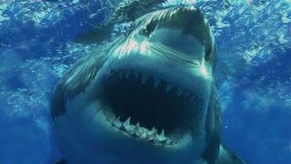 10 самых опасных акул в мире.