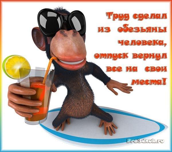 обгонная открытка с обезьяной и не звоните мне я в отпуске того, насколько