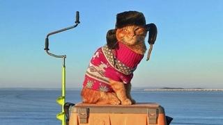 Приморский кот Симба ходит на рыбалку в шапке-ушанке