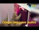 Самые смешные видео про котов и собак 114