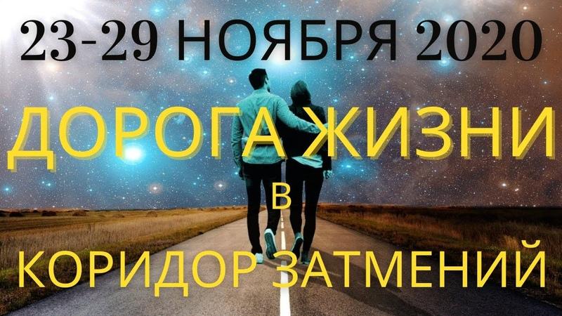 Прогноз 23 29 ноября Дорога жизни к Коридору Затмений и Полнолунию 30 ноября 2020