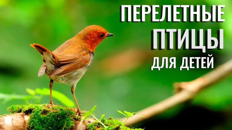 Учим птиц для детей Перелетные птицы и их звуки