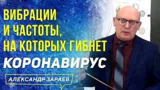 ВИБРАЦИИ И ЧАСТОТЫ, НА КОТОРЫХ ГИБНЕТ КОРОНАВИРУС l ФРАГМЕНТЫ СЕМИНАРА А. ЗАРАЕВА 2020