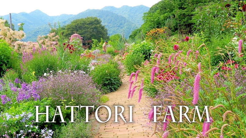 Herb Gardens of Hattori Farm in Kanagawa How many types are there 服部牧場 宿根草 オープンガーデン 4K