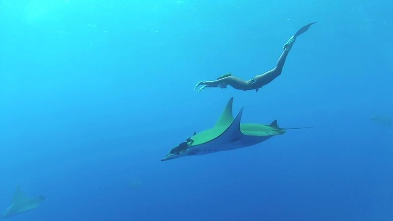 Julia Petrik Freediving with Mabula rays Юлия Петрик фридайвинг с мантами Мабула