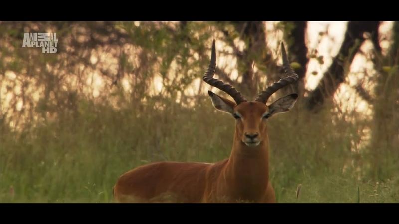 Царство животных Дикая природа Намибии Документальный фильм Animal Planet Kingdom 02