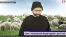 В Дагестане родился баран с человеческим лицом Интервью овцевода