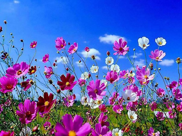 spring wallpaper for computer - HD1366×768