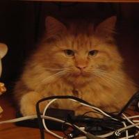 Фотография профиля Насти Паршиной ВКонтакте