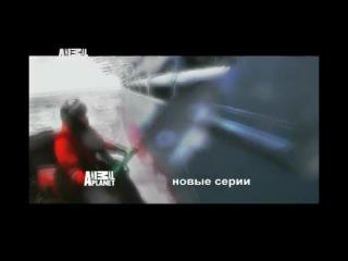Китовые Войны 4 Сезон Реклама