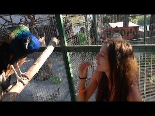 Вероника кормит павлина
