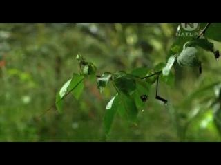 Animal Planet Самые большие и страшные жуки в мире World's Biggest and Baddest Bugs 2004