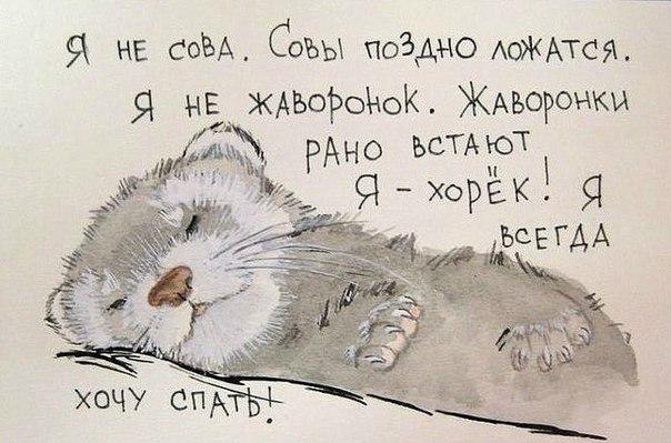 Фото №370167951 со страницы Александра Мальцева