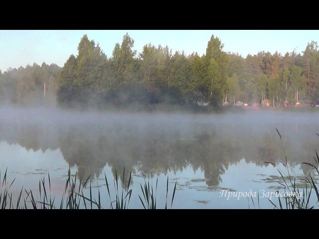 ~ Птицы Поют на рассвете ~ Утро на Пруду с Туманом и Звуками Природы ~☀️