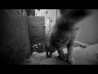 Кошка и любопытный котёнок +Р