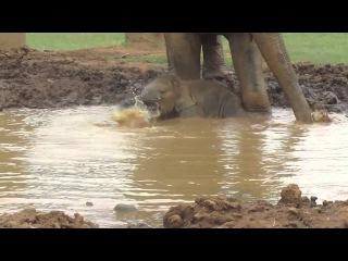 Baby Elephant Navann's Outing