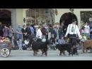 Bernese Mountain Dog Parade MaiFest Spring Festival Leavenworth WA 2010