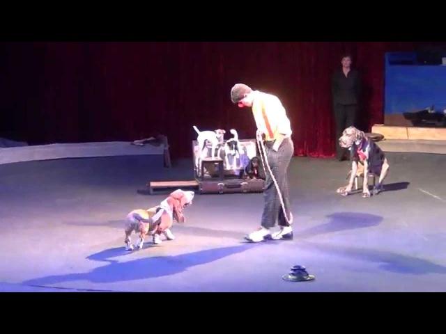 Комическая дрессура собак Цирк Якубовские шоу с собачками dog show CIRCUS