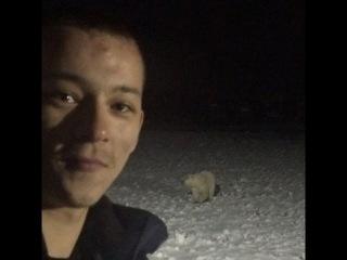 Повар, обвинённый в расправе над медведем, не может найти работу