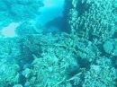 MVI 24 Косяк Желтоперая барабуля= Mulloichthys vanicolensis Yellowfin goatfish